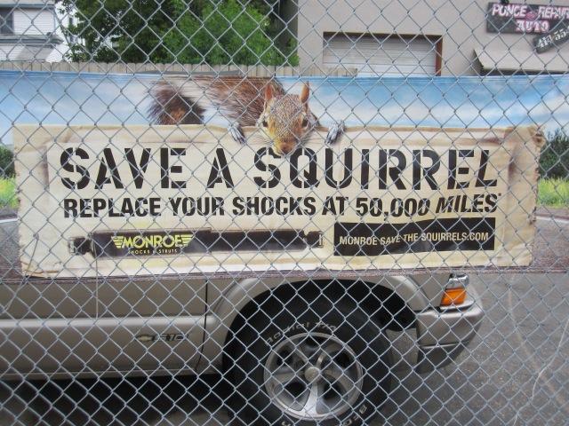 Damn Squirrels